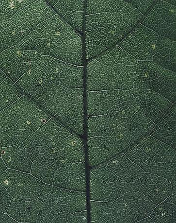 leaf-3634298__480.jpg