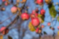 apple-1823806_960_720.jpg