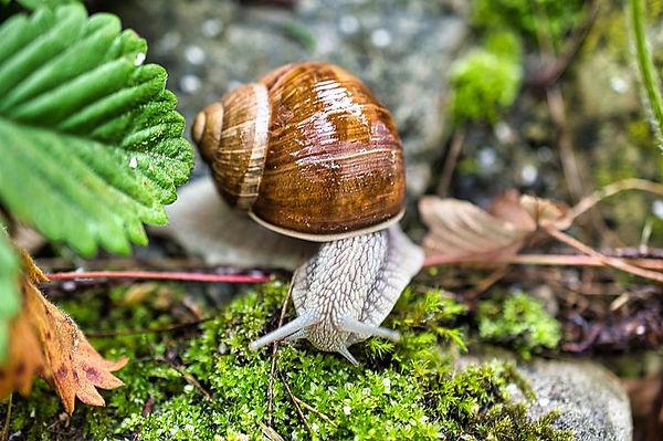 snail-4843761__480.jpg