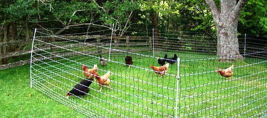 filet mobile poules.jpg