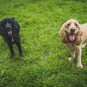 Buddy & Dodger