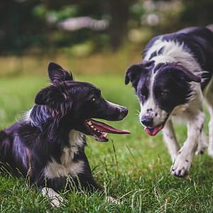 Fletcher & Millie