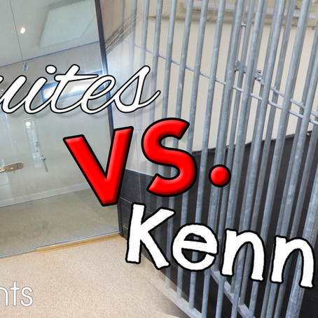 Pethouse Suites vs Standard Kennels - Whats the difference?
