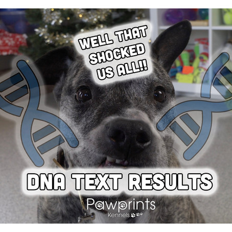 The Results!! - Dog DNA test