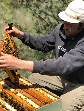 Organic Honey Apiary