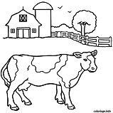 Vache ferme.jpeg
