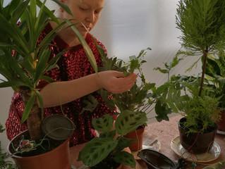 Plantes sonores et transformation en champignon...