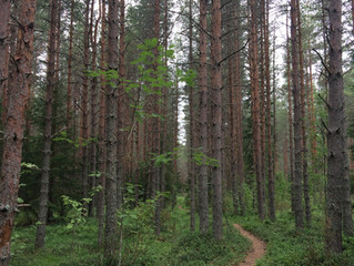 La forêt-miroir