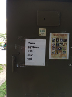 Your Python Ate My Cat