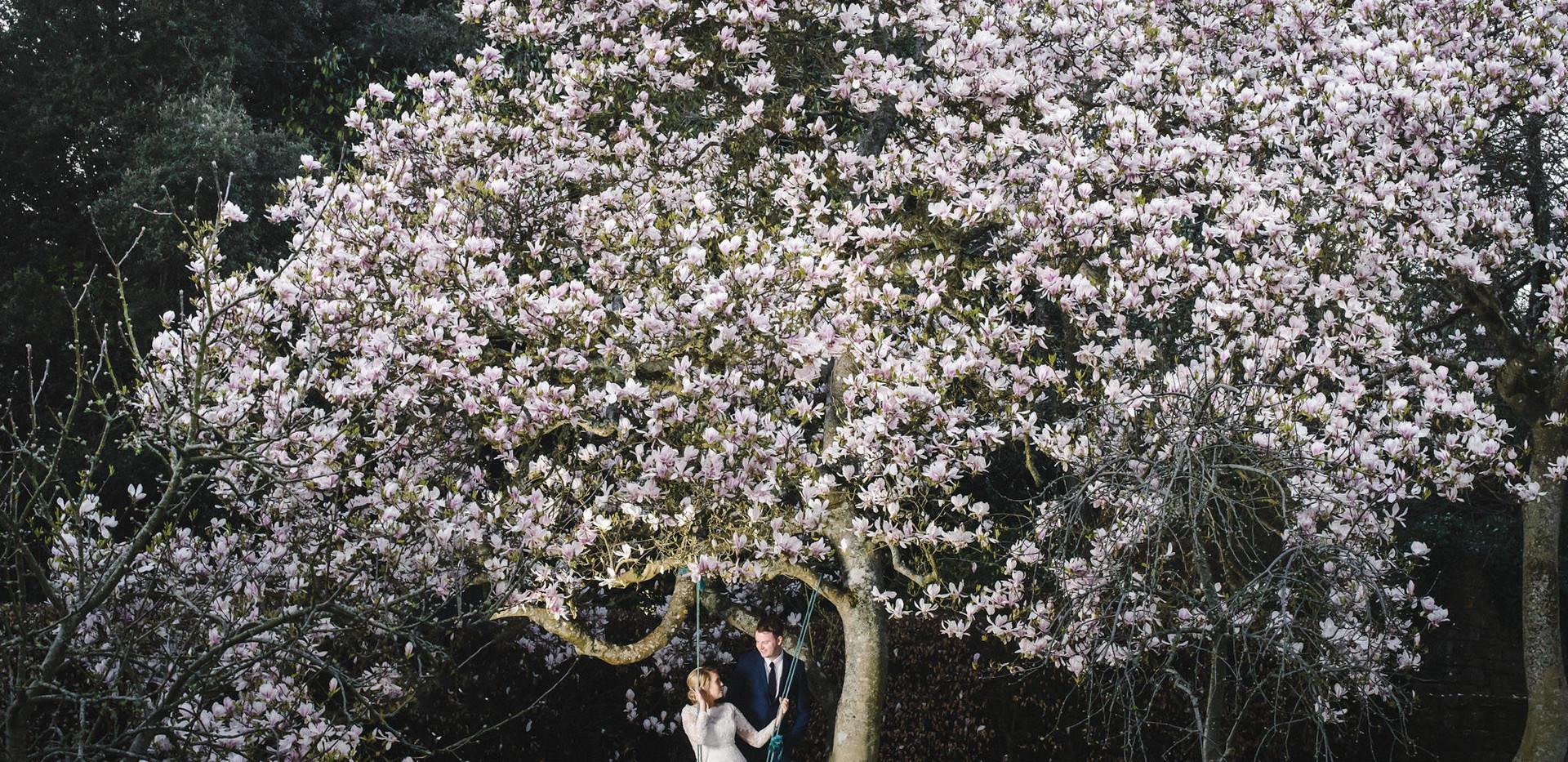 Beautiful Magnolia tree in the Orchard