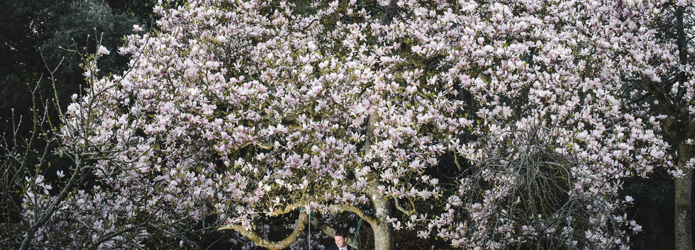 Beautiful Magnolia tree in the Orchard