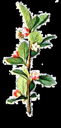 Illustated Zweig mit Blumen