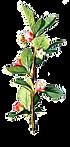 Avec des fleurs Branche complet et illus
