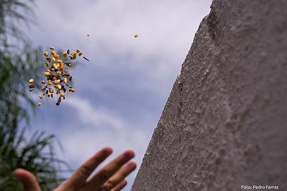 Ação Artística Sementes Invasoras do Grupo de Pesquisa Laboratório de Objeto e Multimídia no Muro da Maua, Porto Alegre, RS - Brasil