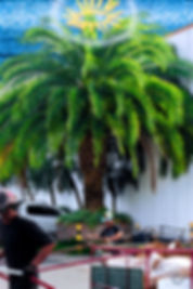 Palm_Harbor_05_(santa_providência)_-_Thi