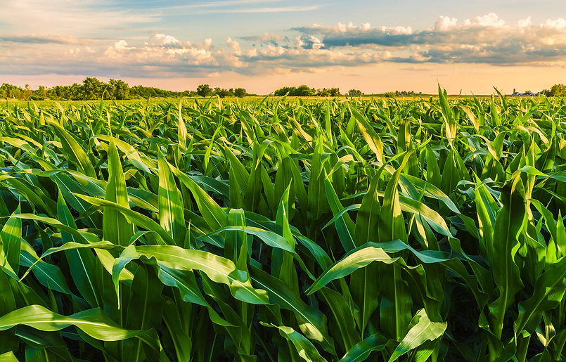 Beautiful field view, as a spiritual per