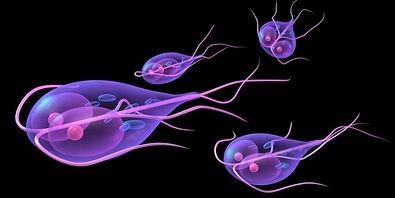 Обследование организма на наличие паразитов