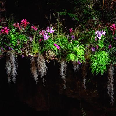 Blumen aller Art- Blumenwunder im Wald