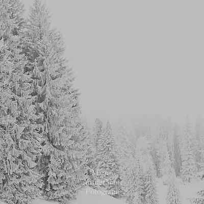 Nebel Eis und Schnee