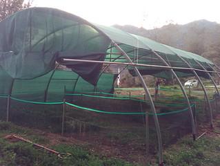 Installation nursery avec périple: maleureusement la tempête Zeus est passée par là :-(
