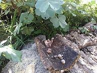 élevage maquis Corse