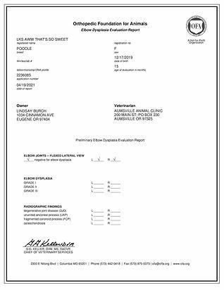 OFA Certificate for elbow dysplasia