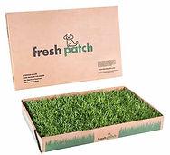 fresh grass.jpg
