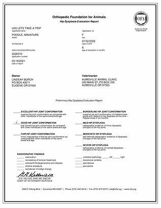 OFA Certificate for hip dysplasia