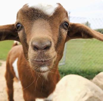 Love Apple Farm pettting zoo animals