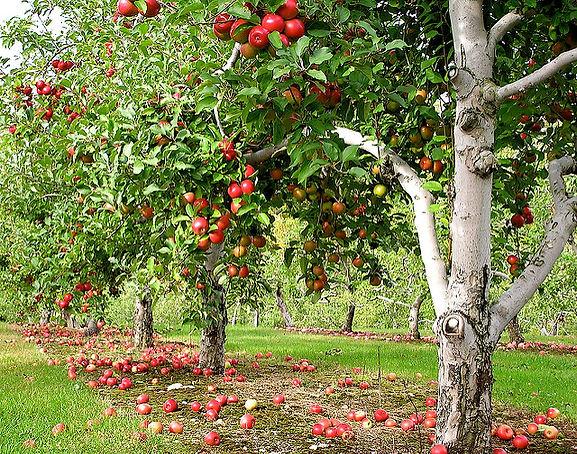 Love Apple Farms Visit the Farm