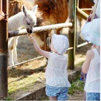 Love Apple Farm playground and pettign zoo