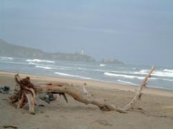 lths+driftwood