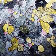 rupijäkälä/ lichenes
