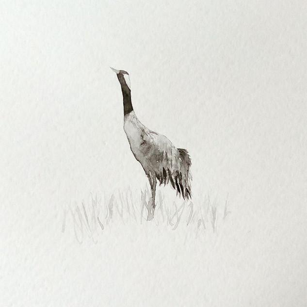 kurki/ crane