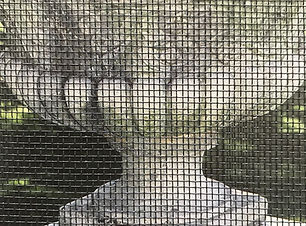 Stainless Steel Flymesh