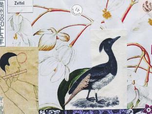 017  mandschueukalyptusreiher _ 2012