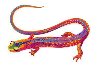salamanderhauck.jpg