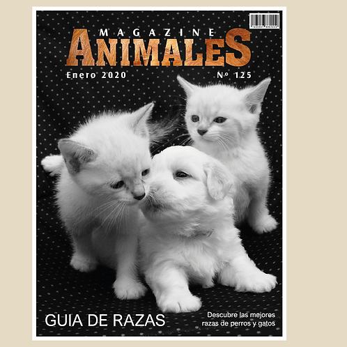 DISEÑO DE ANIMALES 05
