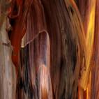 Local Timber-1