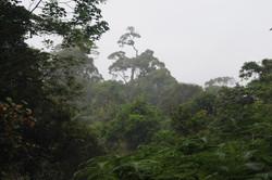 Sikundur Forest