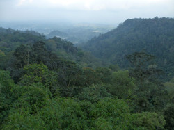Forest View Leuser