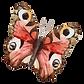 Papillon Aquarelle 19