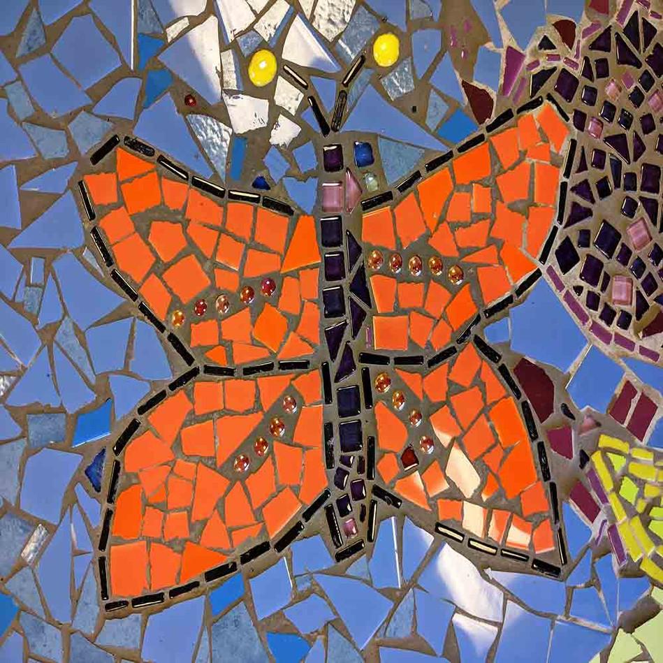 butterfly_schools_sml.jpg