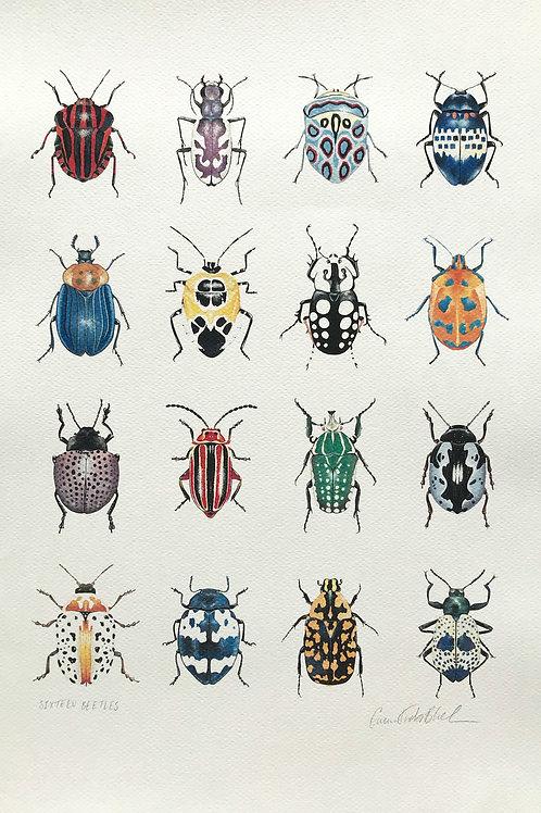 Sixteen Beetles