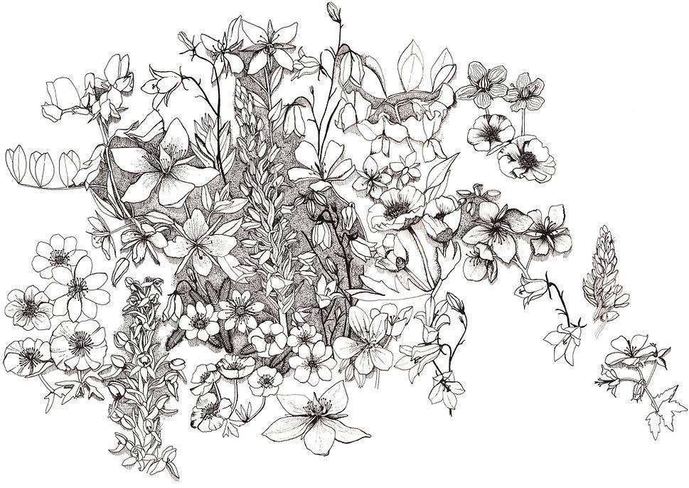 Fine line floral, Emma Tudor-Bloch