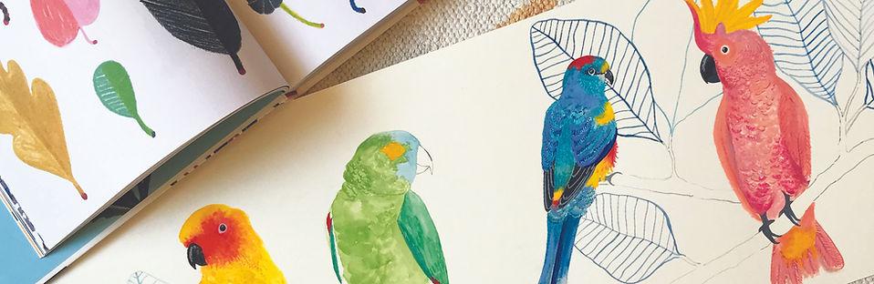 parrots 2.jpg