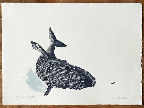 Humpback & Lone Fish