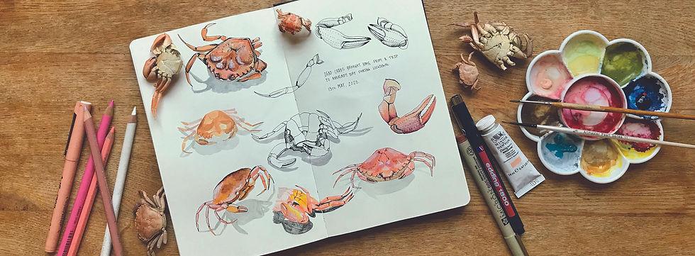 crab strip.jpg