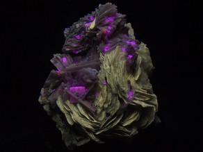 Polylithionite, leucophanite, albite, serandite, etc, from Mont Saint-Hilaire, Quebec, Canada