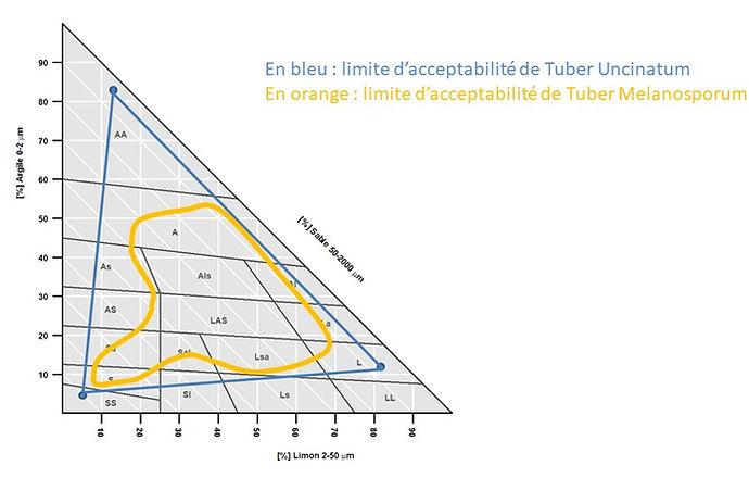 Triangle texture.jpg